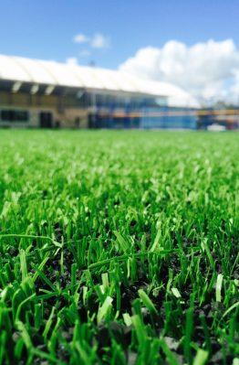 หมวดหมู่หญ้าเทียม